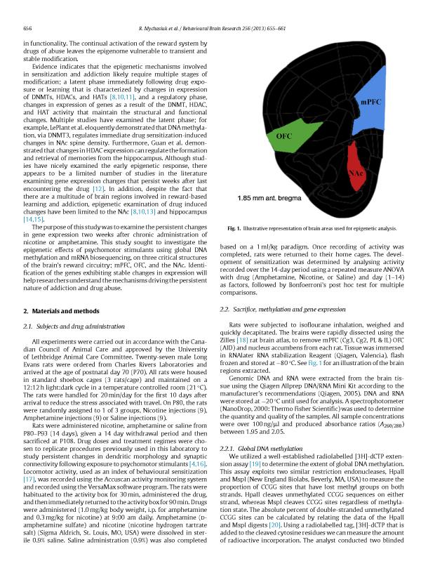 Psychomotor Stimulants + Gene Expression